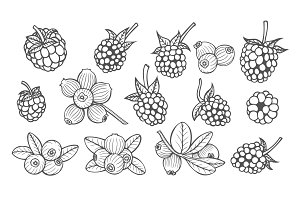 Hand drawn berries