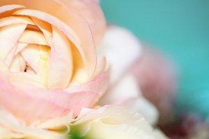 Macro spring flower