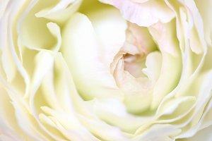 White macro spring flower