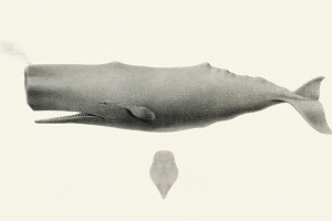 Illustration of whale (PSD)
