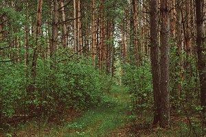 Summer green forest