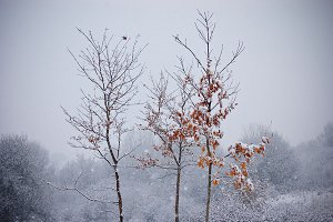Trees in winter with colorful leaves