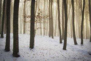 Christmas morning forest scene