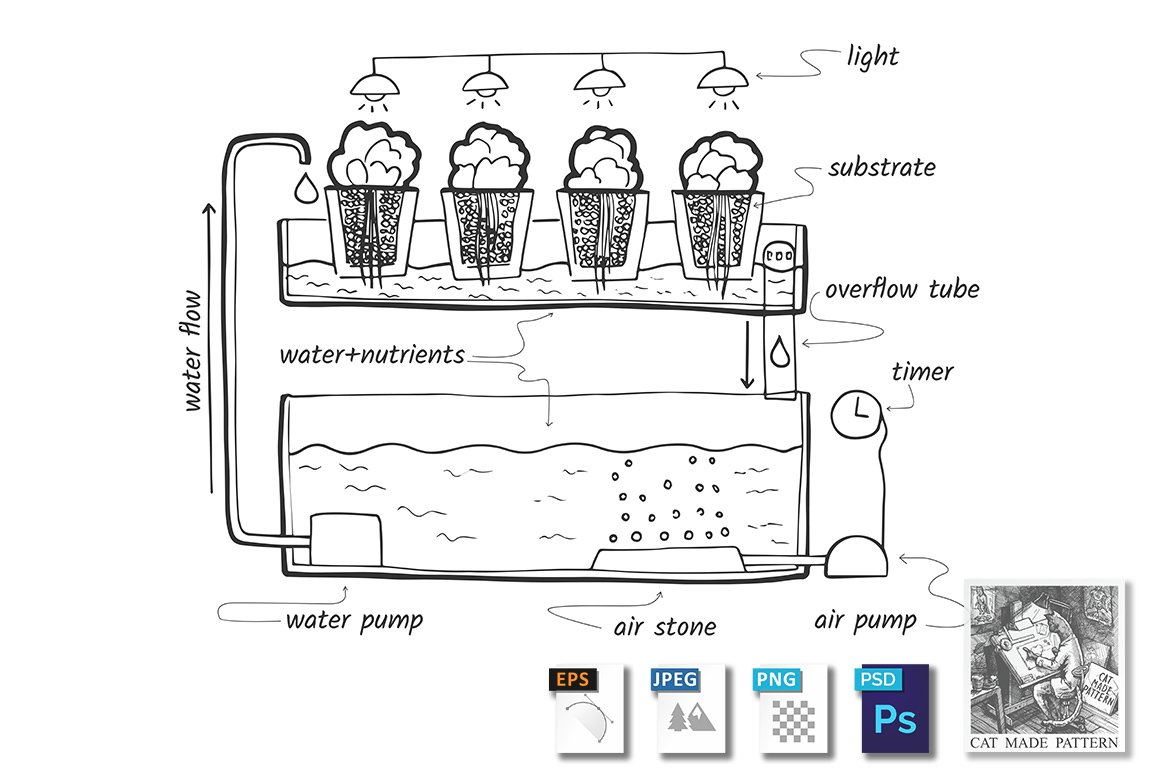 Ebb and flow hydroponic system ~ Illustrations ~ Creative