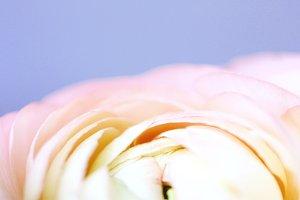 Pastel flower :)