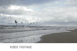 Gulls. Sea coast.
