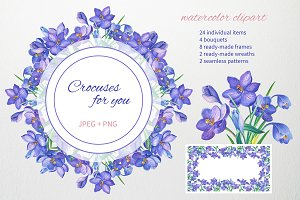 Crocuses for you.Watercolor clipart.