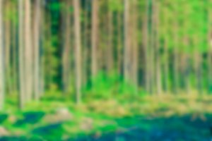 Green forest - blurred image