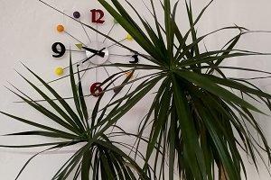Clock behind green plants