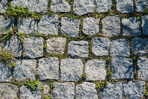 texture of the stone tiles overgrown