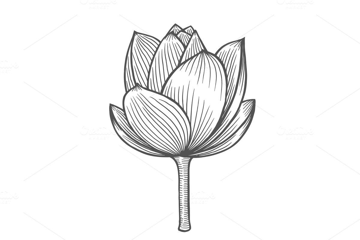 Lotus Flower Illustration Illustrations Creative Market