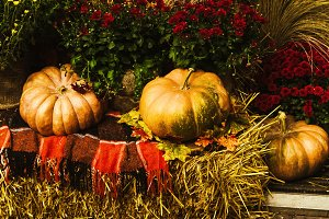 decoration for the holiday. autumn decor of pumpkins and flowers.