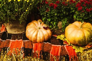 autumn harvest for decoration. cozy atmosphere in autumn. pumpkins near flowers