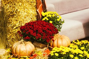 autumn decor for the day of rest. Halloween. pumpkins and flowers