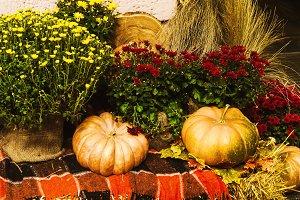autumn decoration. pumpkin, flowers for composition. autumn harvest