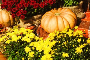 colorful autumn decor. Pumpkins and flowers for coziness and warmth during the holiday. autumn mood