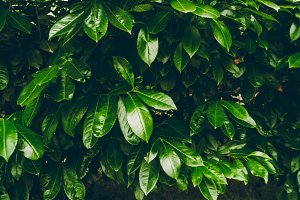 beautiful leaves. tropical leaves. green color. background and texture