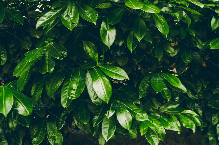Beautiful Leaves Tropical Green Color Background And Texture Nature