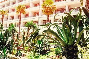 palm trees near the hotel. travel and rest. summer