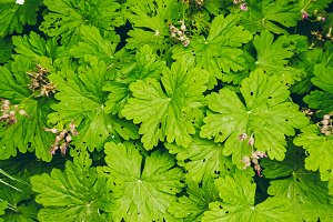 desktop wallpaper. texture of green leaves. view from above