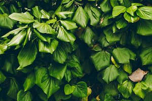 texture of green leaves. background and texture