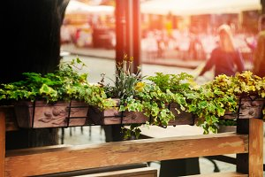 European streets. a cafe with flowers. glare