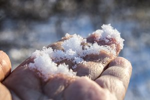 White snow on a hand in a winter forest.