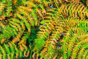 Beautiful ferns leaves green leaves natural floral fern background in sunlight.