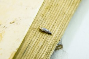 Pest books and newspapers. Insect fe