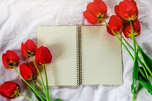 Clean notebook. Red tulips