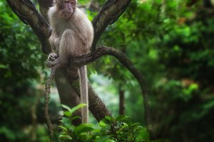 in jungle