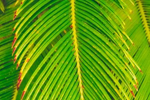 Texture of the leaves of the fern. Tropical plant....