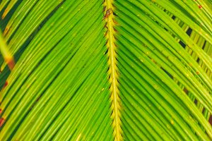 Bright palm leaves. Texture and background.