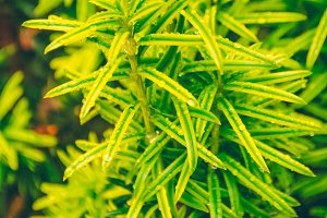 Bright leaves. Plant growth. raindrops