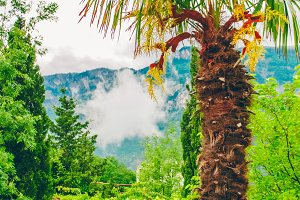 Palms in the tropics. beautiful landscape. Clouds over the mountains