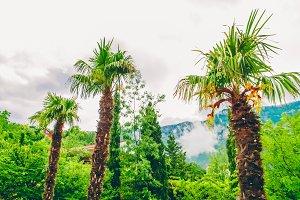 Tropical palm trees. beautiful landscape