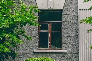Retro home window. Green bushes