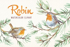 watercolor robin bird clipart