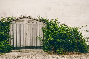Old garage. Grow bushes. Vintage