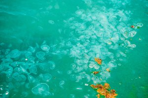 A lot of jellyfish in the sea. Glare of the sun. Texture and background