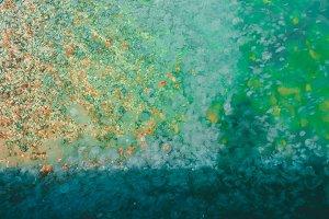 sea water. Jellyfish swim