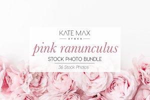 Pink Ranunculus Stock Photo Bundle