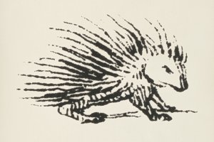 Porcupine icon (PSD)