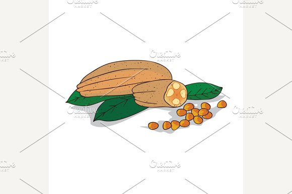 Isolated clipart Allanblackia