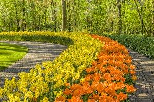 Colorful flowers in Keukenhof