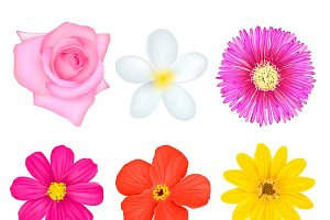 Isolated Colorful Flowers Set
