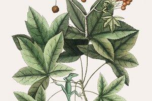 Illustration of plant (PSD)