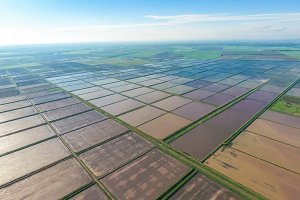 Flooded rice paddies. Agronomic methods of growing rice in the f