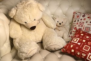 white teddy bears on the sofa with pillow