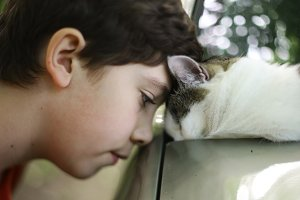 teen boy kiss cat sleeping on the car